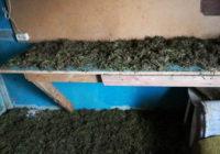 На кладбище города Заринска найдены наркотики (стелажы с марихуаной)
